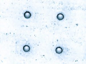Small holes in glass. Hole diameter is 10 microns. Potomac can drill precision holes in almost any type of glass material.